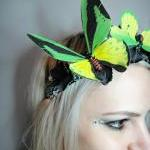 Green Yellow Butterfly and ..